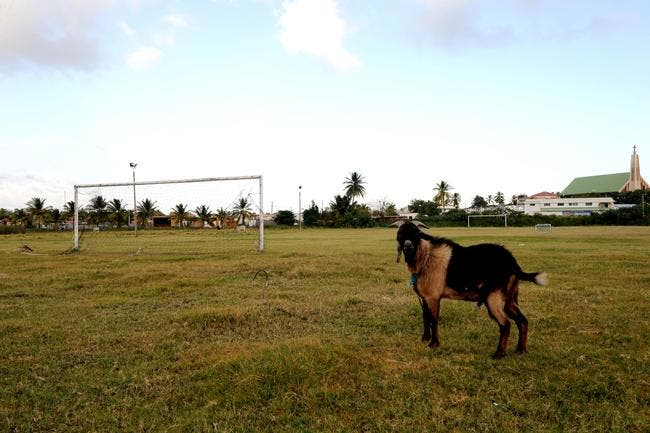 OM : Les chèvres dépriment d'être comparées aux joueurs marseillais